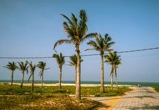 Palmen gegen blauen Himmel Lizenzfreie Stockfotografie
