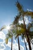 Palmen gegen blauen Himmel Lizenzfreies Stockbild