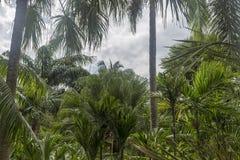 Palmen gegen blauen Himmel, Palmen an der tropischen Küste stockbilder