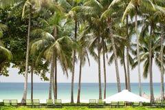 Palmen gegen blauen Himmel lizenzfreie stockbilder