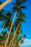 Palmen gegen blauen Himmel Vietnam, Mui Ne, Asien Stockfoto