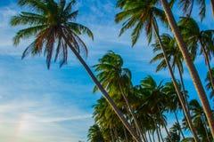 Palmen gegen blauen Himmel Vietnam, Mui Ne, Asien Lizenzfreies Stockfoto