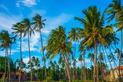 Palmen gegen blauen Himmel Vietnam, Mui Ne, Asien Stockfotografie