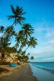 Palmen gegen blauen Himmel Vietnam, Mui Ne, Asien Stockfotos