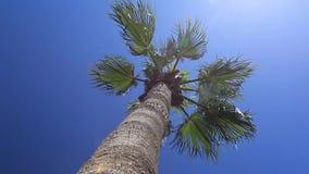 Palmen gegen den blauen Himmel stock video