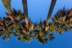 Palmen gegen den blauen Himmel Stockbild