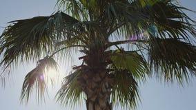 Palmen gegen den blauen Himmel mit weißen Wolken stock footage