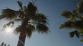 Palmen gegen den blauen Himmel mit weißen Wolken stock video