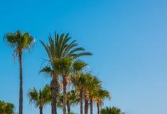 Palmen gegen den blauen Himmel Nat?rlicher Hintergrund Kopieren Sie Platz stockfotos