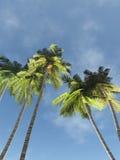 Palmen gegen den Himmel stockfoto