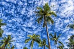 Palmen gegen den Himmel Stockbild
