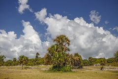 Palmen gegen einen blauen Himmel mit Wolken Lizenzfreies Stockbild