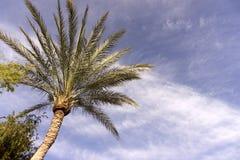 Palmen an gegen einen schönen blauen Himmel Stockbild