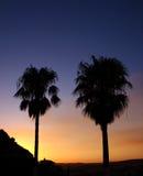 Palmen gegen einen Sonnenuntergang Stockfotos