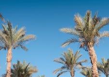 Palmen gegen Himmel Stockfotos