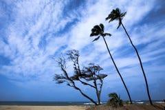 Palmen gegen schönen stürmischen Himmel Stockfoto