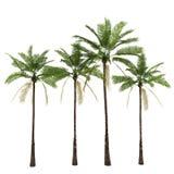 Palmen getrennt auf Weiß Lizenzfreie Stockfotografie