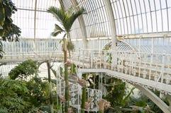 Palmen-Haus, Kew Gärten, London Stockbilder