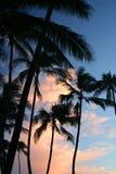 Palmen in Hawaï Royalty-vrije Stock Foto's