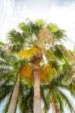Palmen in hellen Himmel stockfotos