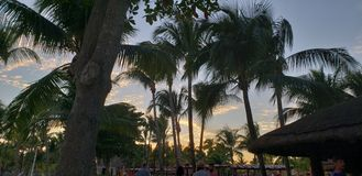Palmen in het strand stock foto