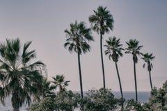 Palmen in het Strand van Manhattan, Californië royalty-vrije stock fotografie