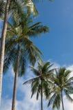 Palmen am Hintergrund des blauen Himmels Lizenzfreie Stockfotografie