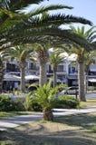 Palmen im allgemeiner Park-Garten von der Rethymno-Stadt von Kreta in Griechenland stockbilder