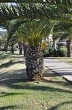 Palmen im allgemeiner Park-Garten von der Rethymno-Stadt von Kreta in Griechenland stockfoto
