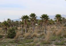 Palmen im entspannenden Park lizenzfreie stockfotografie