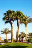 Palmen im Garten Stockfotos