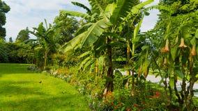 Palmen im Garten Stockbild
