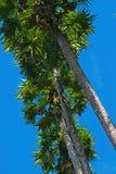 Palmen im Himmel Stockfotografie