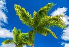 Palmen im Himmel Stockfotos