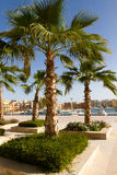 Palmen im Jachthafen von EL gouna Lizenzfreie Stockfotos
