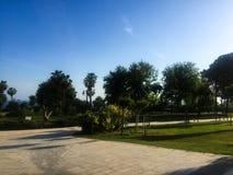 Palmen im Park lizenzfreies stockbild
