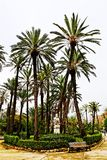 Palmen im Park-Landhaus Bonanno, Palermo stockfotografie
