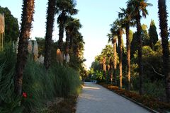 Palmen im Park stockfoto