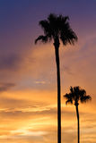 Palmen im Sonnenuntergang Lizenzfreies Stockfoto