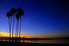 Palmen im Sonnenuntergang Lizenzfreie Stockfotografie