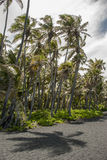 Palmen im Wind auf schwarzem Sand setzen auf den Strand Lizenzfreie Stockbilder