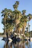 Palmen-Insel, Encanto Park See, Phoenix, AZ Stockbild