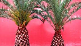 Palmen in Istanboel, Turkije, Dolmabahçe-Paleis Royalty-vrije Stock Foto