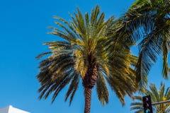 Palmen in Kalifornien stockfotos