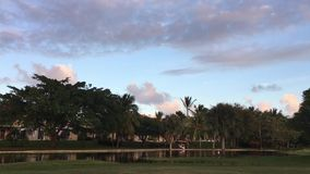 Palmen, keerkringen, wind, avond, aard stock video