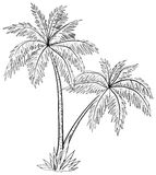 Palmen, Konturen Stockfotografie