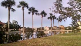 Palmen langs kanaal Stock Afbeeldingen