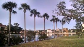Palmen langs kanaal Royalty-vrije Stock Foto's