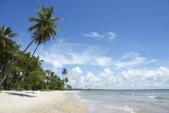 Palmen leeren tropischen brasilianischen Strand Lizenzfreie Stockbilder