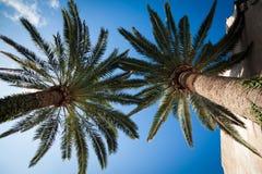 Palmen 1, Mallorca 2014 Lizenzfreies Stockbild